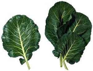 Three raw collard green leaves
