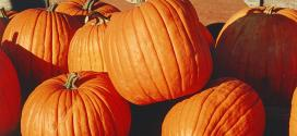 White People Riot Over Pumpkins, Illustrate White Privilege And Media Bias